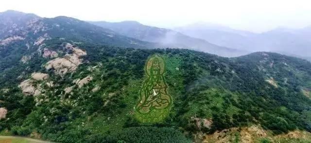 """青島茶山風景區位于平度城北11公里, 背依大澤山,譽為""""膠東明珠""""."""