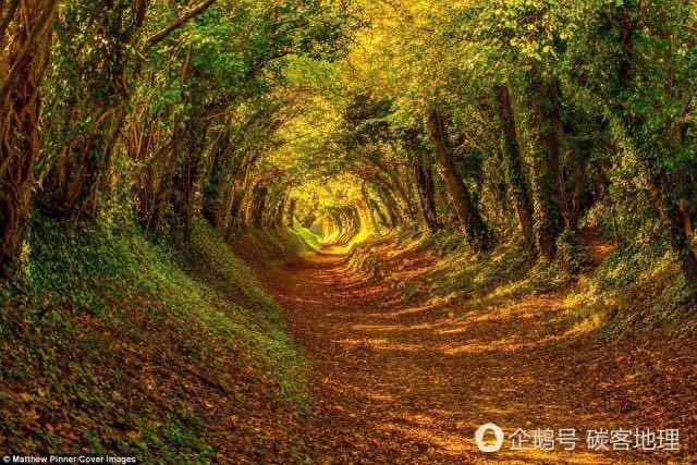 英国现魔幻秋天隧道 背后藏拉尼娜现象