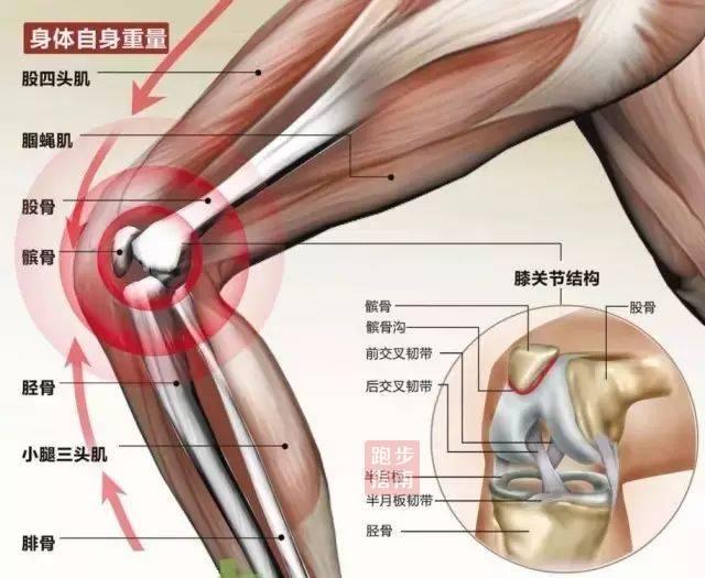 预防+锻炼! 跑者膝关节强化最全指南全在这