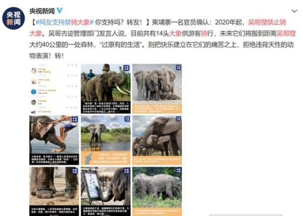 柬埔寨一名官员确认2020年起吴哥窟禁止骑大象,获网友支持
