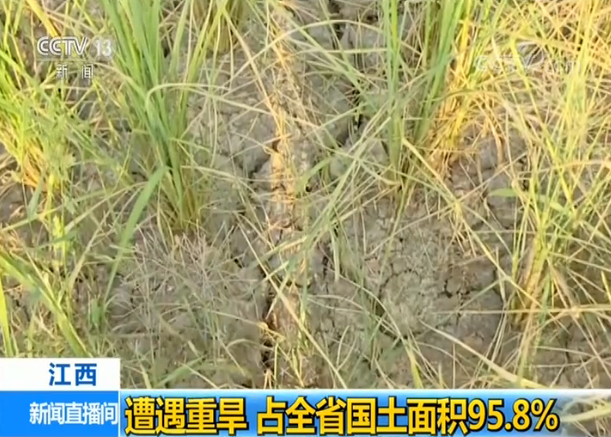 鄱阳湖 地区 江西超九地区严重干旱,Po阳湖水位