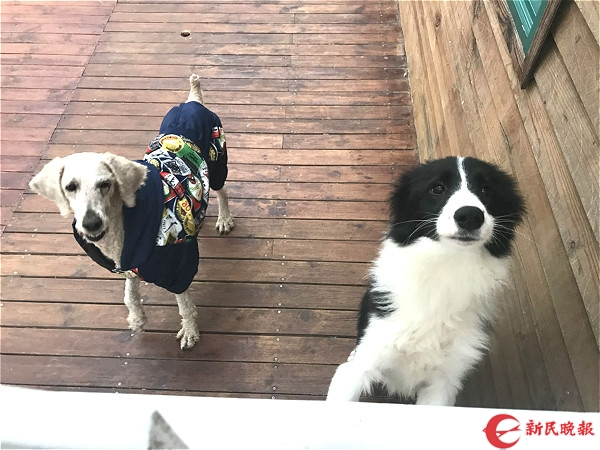 图说:被救助的小狗。李一能 摄