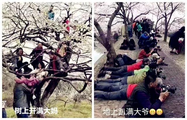 刘伯温四肖中特料2018斗图,如何在朋友圈杀出一条血路?