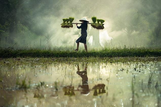 """到进博会尝世界""""最好大米""""""""最贵胡椒""""!一文告诉你柬埔寨香米有哪些品种,棕榈糖怎么做"""
