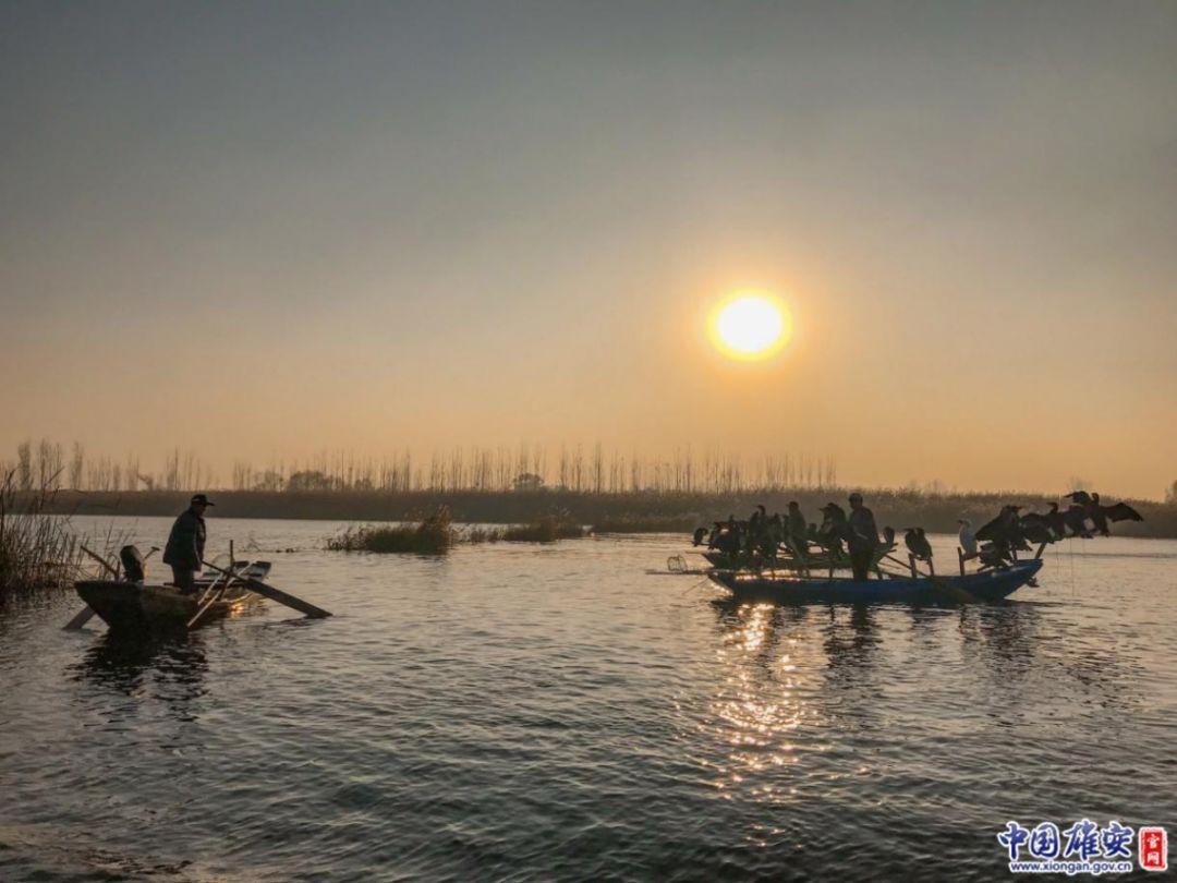 斜阳下的白洋淀渔民。中国雄安官网记者王京卓摄