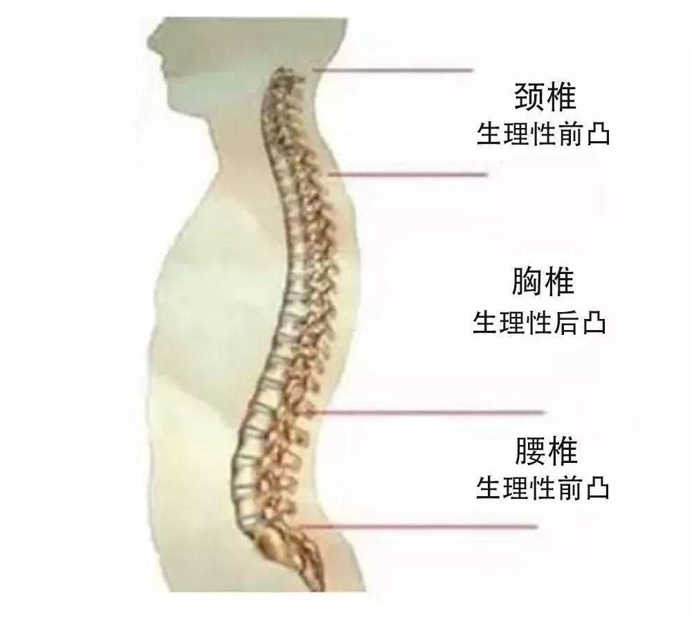 胸椎、颈椎、腰椎、骨棘突定位(图文学解)汇总.doc -max上传...