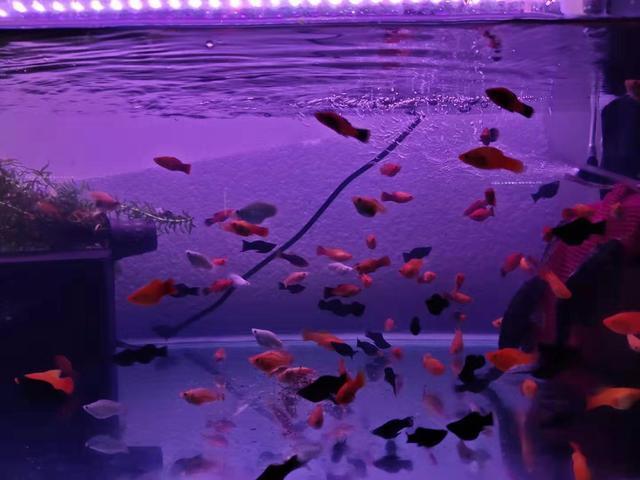 不喜欢鱼缸造景,所有小型鱼都可以裸缸饲养吗,有的鱼友说不行?