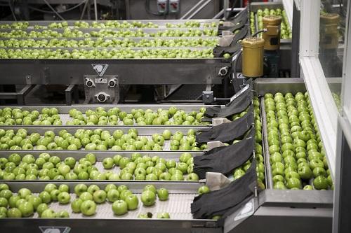 2017年11月3日,在美国华盛顿州韦纳奇市郊的奥威尔果品公司加工厂,苹果在自动生产线上清洗。 新华社记者 王迎 摄