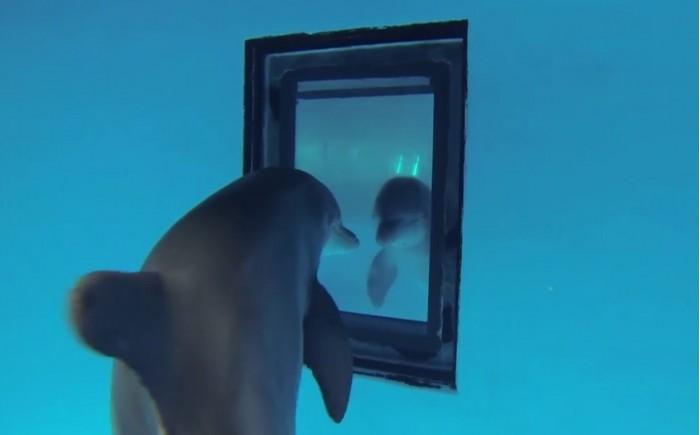可伶!海豚作为商业性渔业诱饵被大量捕杀
