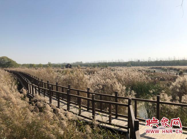 陈桥镇黄河湿地生态公园:昔日黄袍加身地 如今珍稀鸟乐园