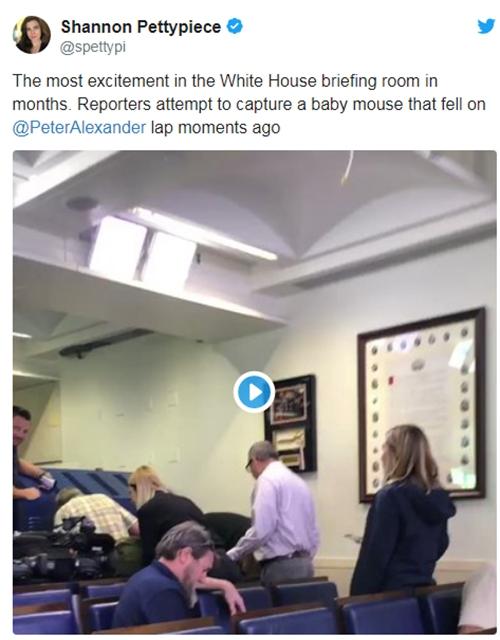 【蜗牛棋牌】美媒驻白宫记者正工作 从天而降一老鼠直接掉腿上