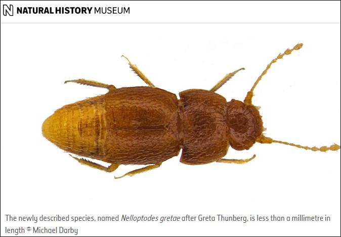 英博物馆以瑞典环保少女命名一甲虫:赞扬她的贡献
