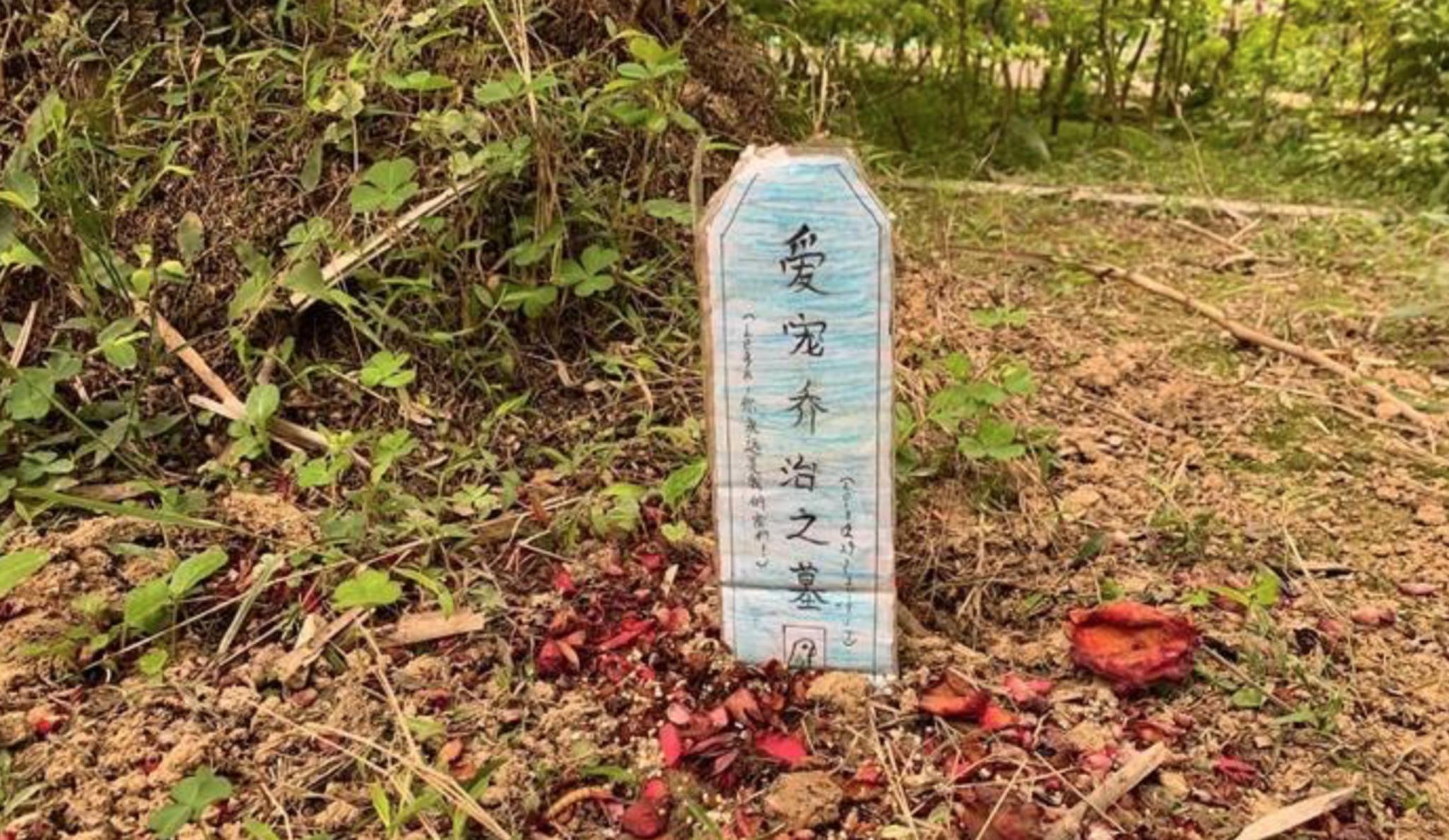 南宁一小区绿化带出现一个宠物坟墓,引发业主疑虑。网络图