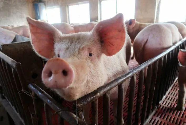 商务部:对澳出口牛肉恢复适用最惠国税率至2019年底