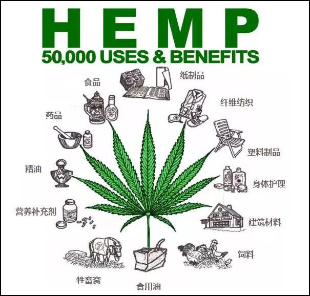 工业大麻的使用范围(图片来源:网络)