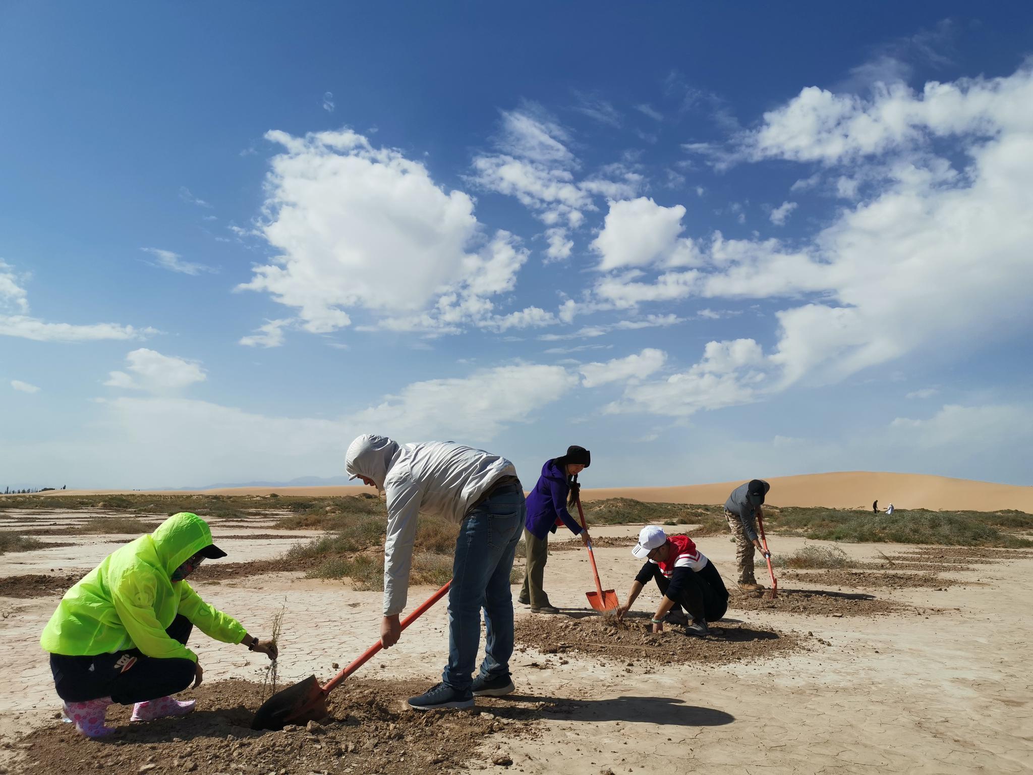 志愿者开始在沙土地上挖树坑,以便之后插梭梭的树苗。受访者供图