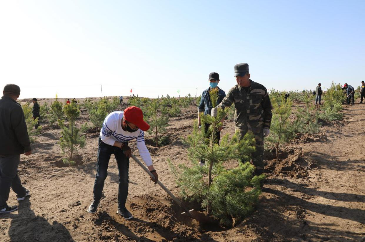 植树造林 防风固沙