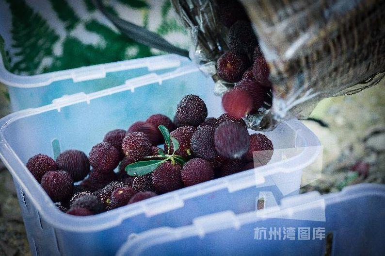 """""""慈溪杨梅""""又添""""国字号""""荣誉!还有这些农产品也被列入省特优区"""