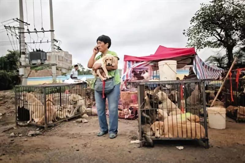 ▲动物珍惜人士杨晓云在护理她从玉林狗肉节买回来的狗。图片来源:新京报网。