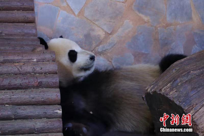 中国抗疫经验这样分享给世界