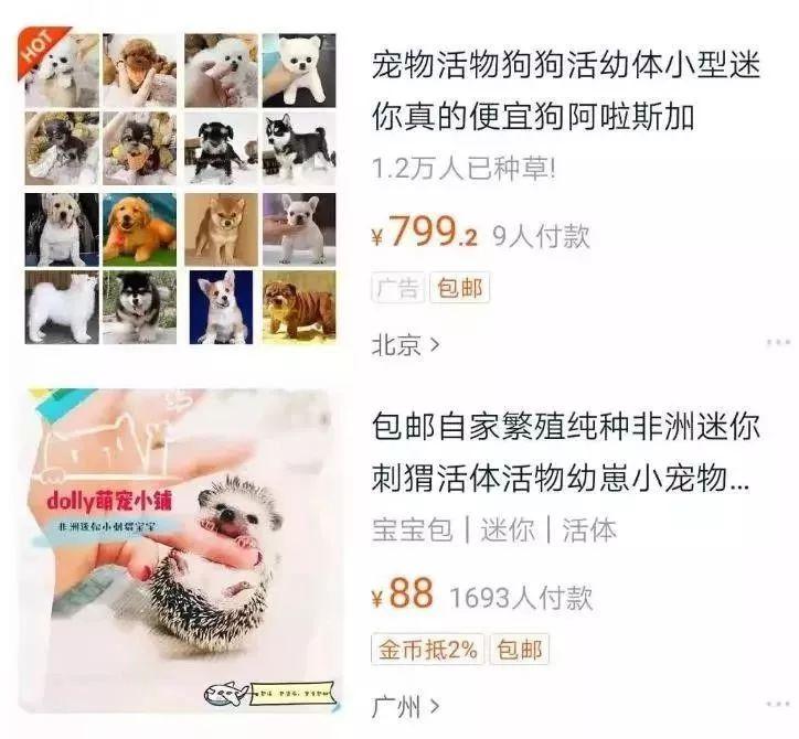香港区议员李世鸿阻碍港警执法 下一秒被当场摁倒