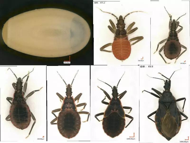 本文图片均来自广州市疾病预防控制中心微信公众号