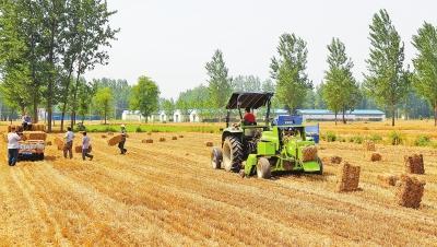 河南:按照国家统一部署 今年将积极恢复大豆生产大豆优质大豆刘新全