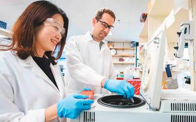 美国科学家与中国研究员在劳伦斯伯克利国家实验室做实验。资料图片