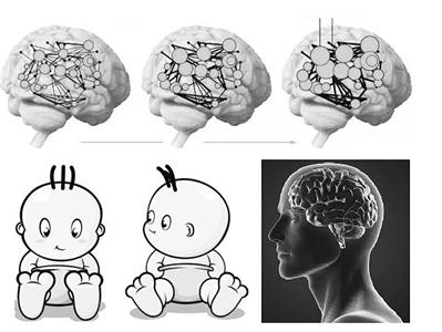 研究认为,18岁时人的大脑仍在经历巨大变化,30岁左右才达到成人状态。 科技日报 图