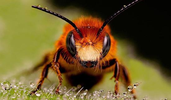 """美国《科学》杂志:蜜蜂能理解抽象数学概念""""零"""""""
