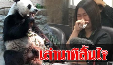 清迈动物园就旅泰大熊猫死亡召开发布会,工作人员伤心落泪