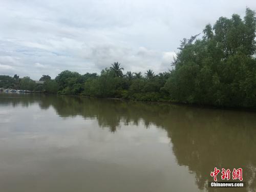 这植物能怀孕?探访中国首个红树林湿地自然保护区