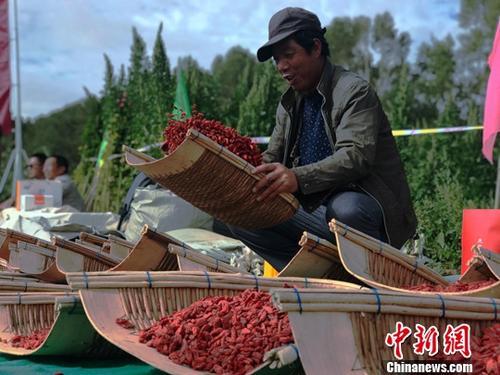 青海省海西州率先在中国藏区实现集体脱贫。原料图为青海省海西州格尔木市农民晾晒枸杞。中新社记者 孙睿 摄