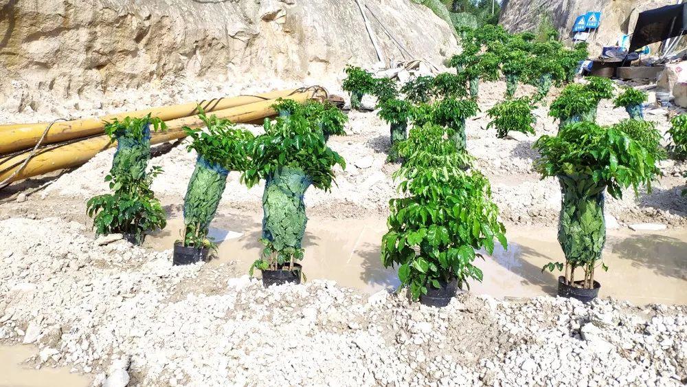 """今年7月,福建省漳浦县某企业为搪塞检查搞""""盆种式复绿"""",被环保督察人员逮个正着。"""