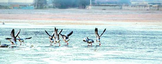 云南香格里拉纳帕海自然珍惜区的暗颈鹤。清明图片/视觉中国