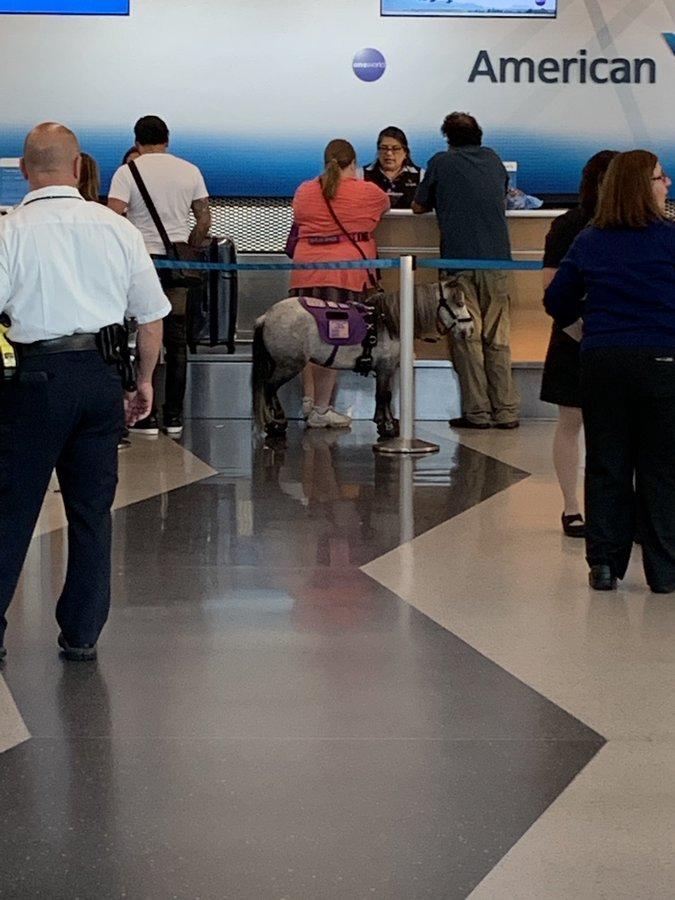一男子很惧怕坐飞机_美国男子坐飞机 发现客舱里站着一匹小马(图)|埃文|推特_新浪新闻