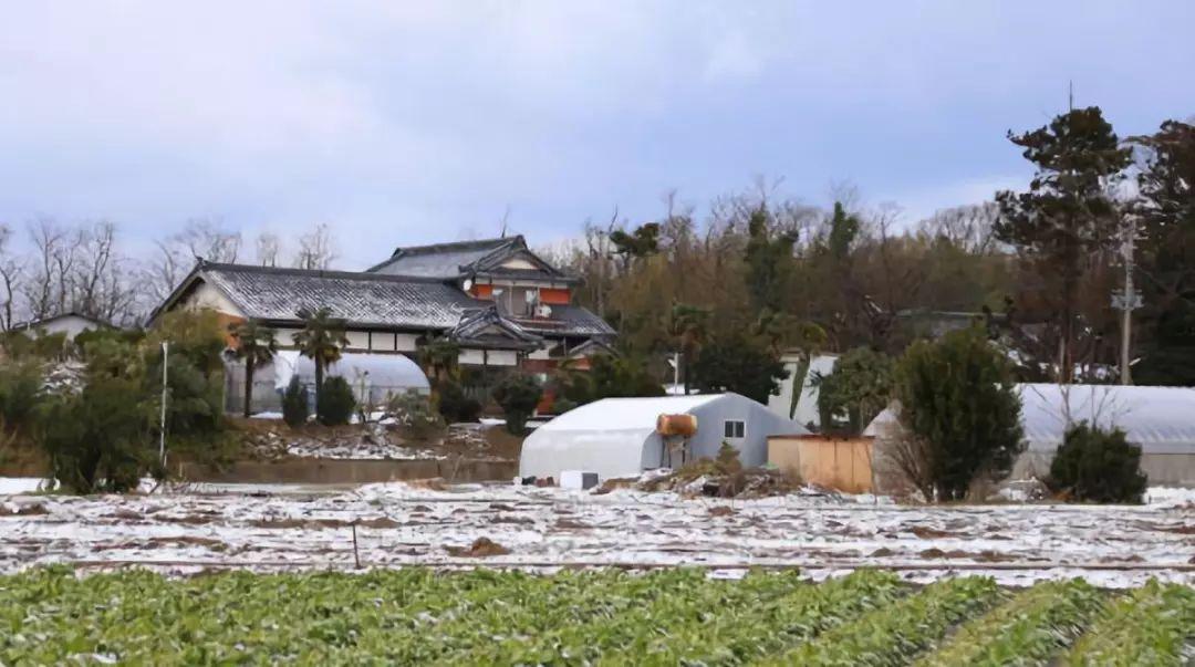 ▲日本本州岛北部新潟县的一户农家。 图/新华社