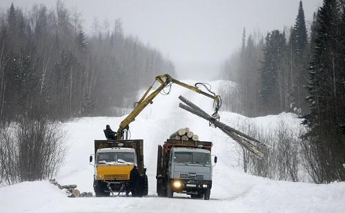 中国人是砍光俄罗斯森林的元凶?俄媒这样说