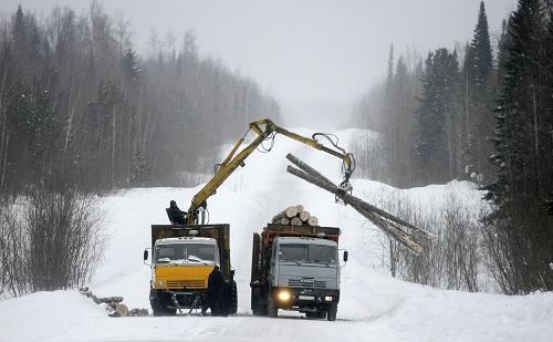 中国人是砍光俄罗斯森林的元凶? 俄媒这样说