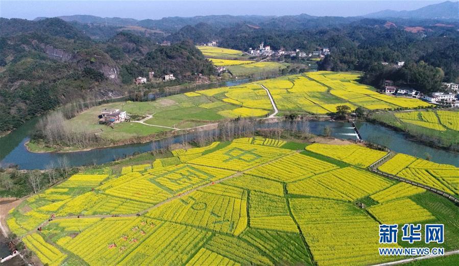 华南农业大学:穿山甲为新型冠状病毒潜在中间宿主