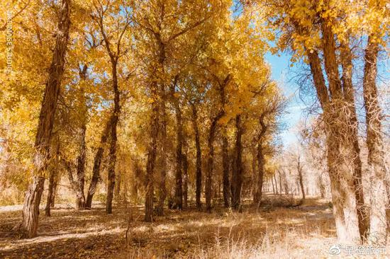 4bbd ihyxcrp4982004 - Xinjiang Huyang punches the whole Raiders, and promises you a gorgeous late autumn! - Sina