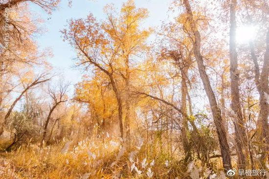 d6d1 ihyxcrp4982072 - Xinjiang Huyang punches the whole Raiders, and promises you a gorgeous late autumn! - Sina
