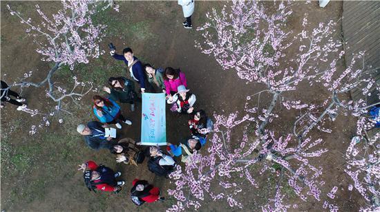 大连旅顺二零三高地樱花园 官子 摄