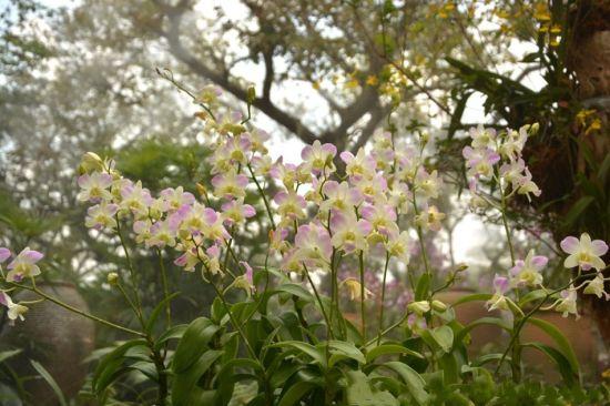蘭園內的蘭花 圖:新浪博主:@早報網彩霞