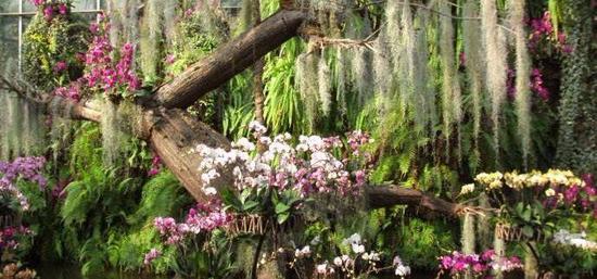 武汉植物园兰花展·淡雅清香(图片来源于网络)