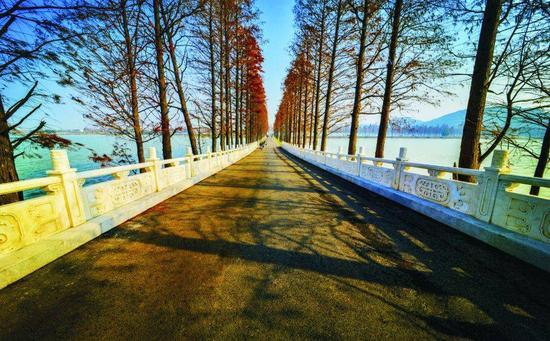 东湖绿道二期·串起大湖之美(图片来源于网络)