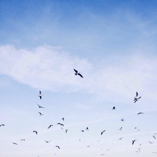 武汉东湖海洋乐园飞鸟世界·重装上阵(图片来源于网络)