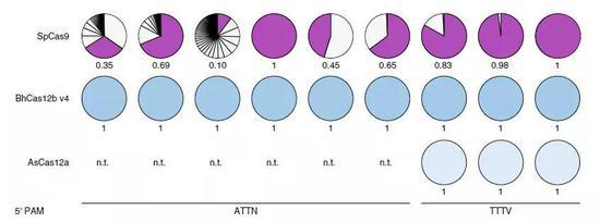 ▲GUIDE-seq分析显示,重新设计的Cas12b没有出现Cas9那样的脱靶效应(图片来源:参考资料[1])