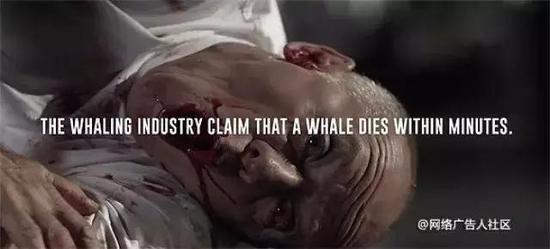 捕鲸者声称鲸鱼会在几分钟物化亡。
