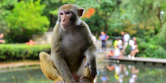 黔灵山的猴子有灵气